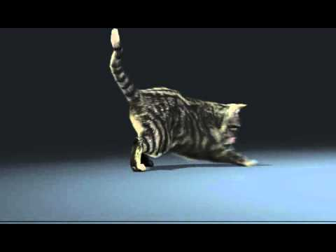 3d Animated Cat Chase  - Student Work - Online Animation School - animationaTeam.com
