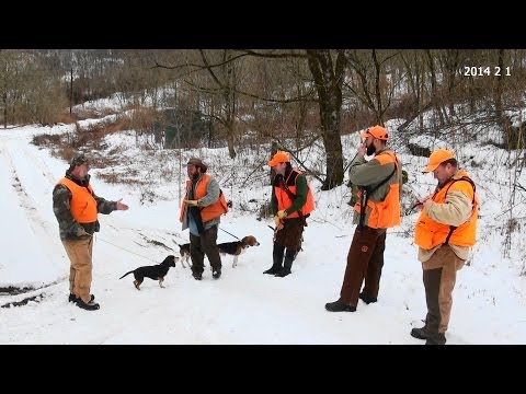 Skyview's Beagles Rabbit Hunting Annual Ohio Rabbit Hunt With Good Friends