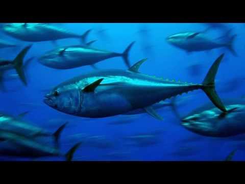 Interesting Tuna Facts