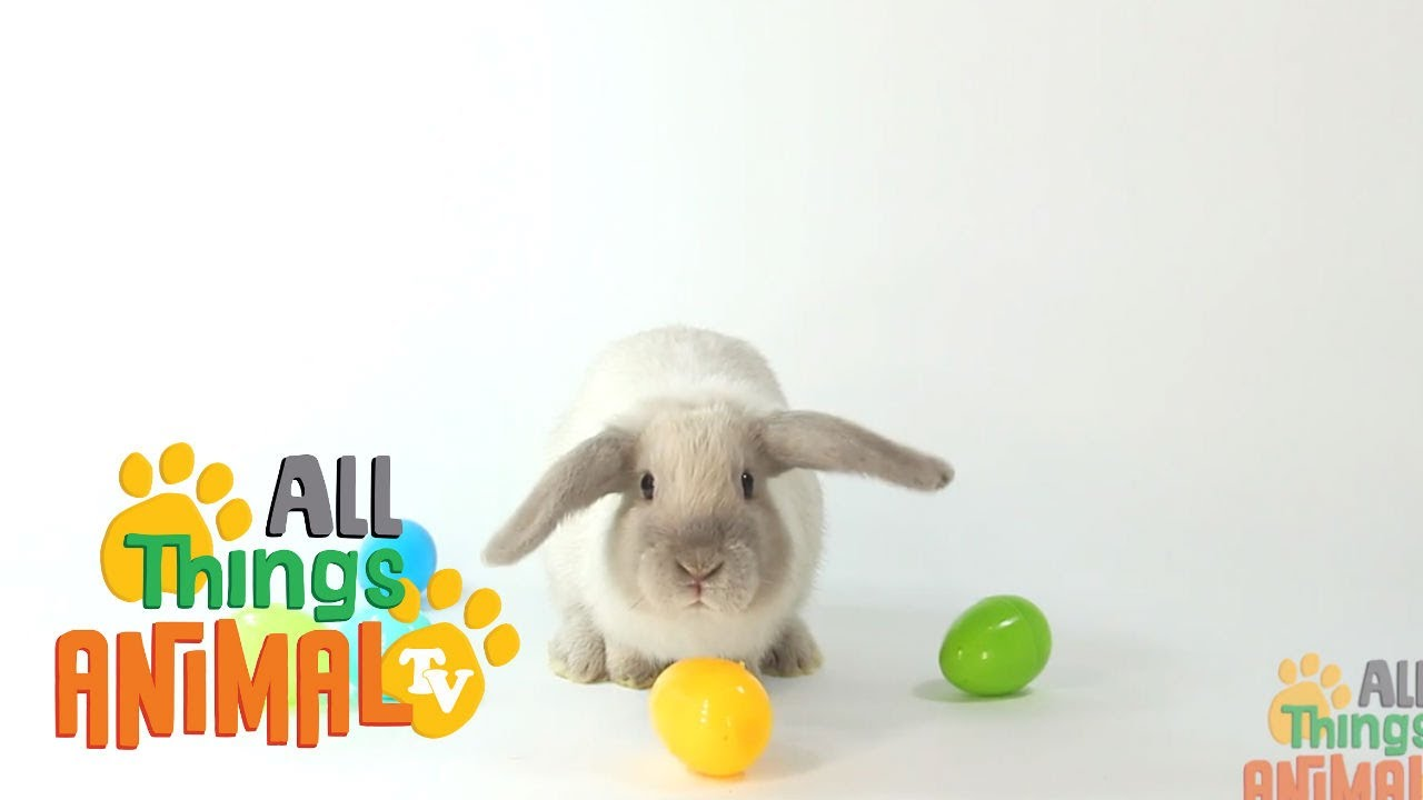 RABBITS: Animals for children. Kids videos. Kindergarten ...