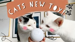 Unboxing of Interactive Cat Led Ball Amazon Toy with USB Charge | 2020