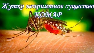 Жутко неприятное существо - комар