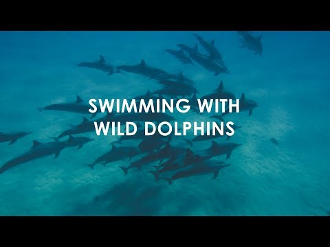 Wild Dolphins! - Waianae Hawaii