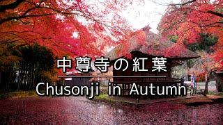 中尊寺の紅葉 | Chusonji In Autumn (4k)