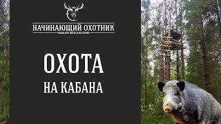 Охота кабана с вышки 2016 видео