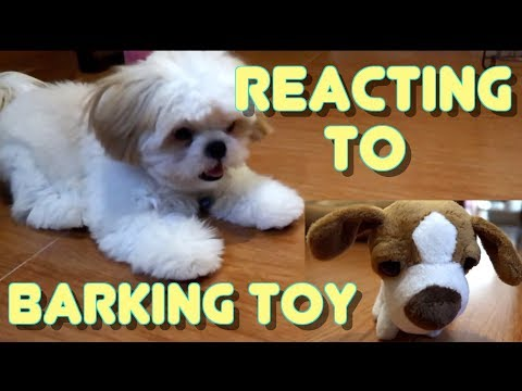 Puppy's Reaction to Barking Dog Stuffed Toy