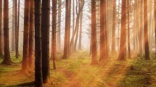 10 더불어 숲 아주남성 15회 정기연주회