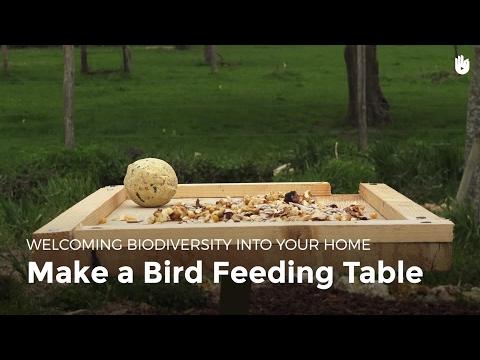 Make a Bird Feeder | Biodiversity