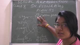 """FERTILISATION IN FLOWERS"" CLASS X SCIENCE CBSE  BY POONAM MAM"