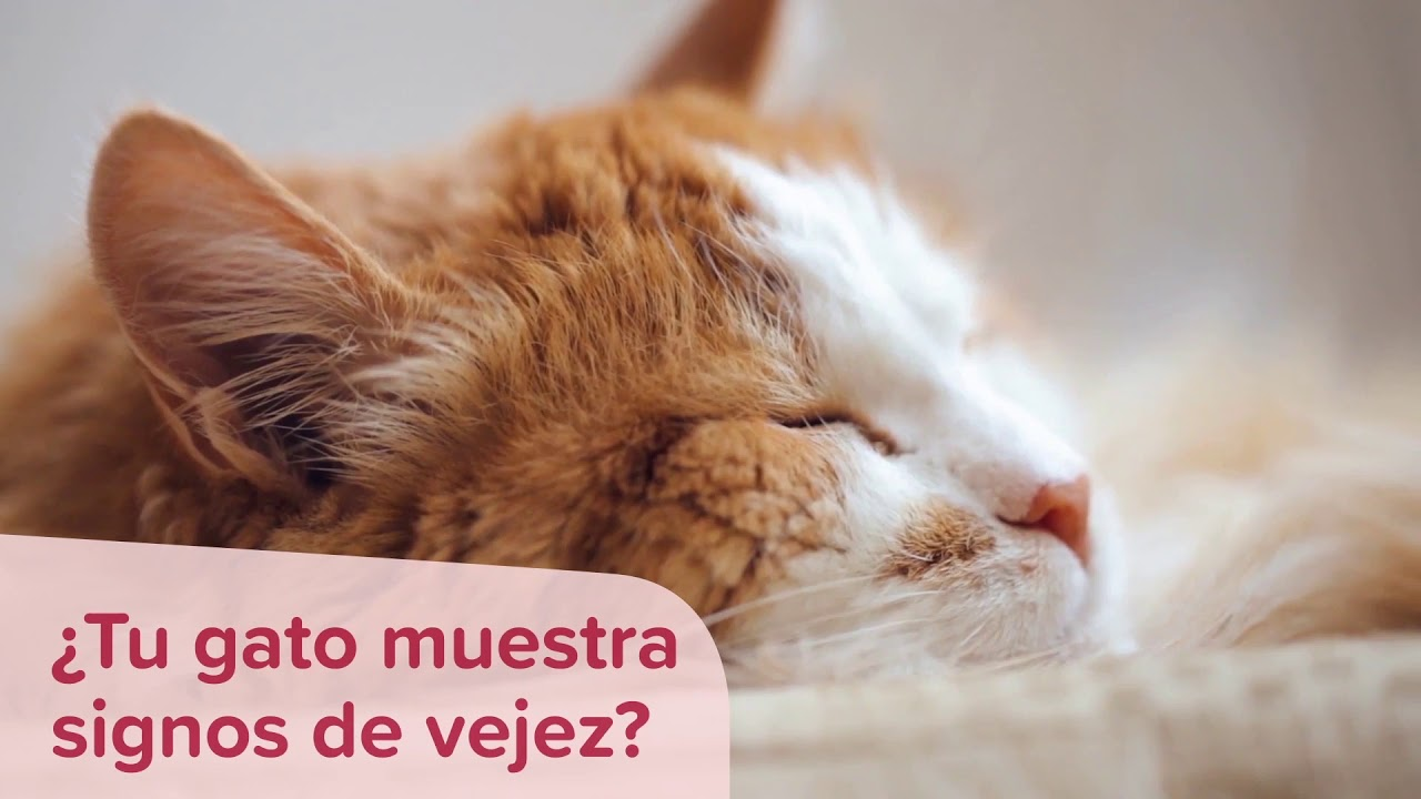 Suplemento alimienticio Beaphar NutriSupport gatos Senior.