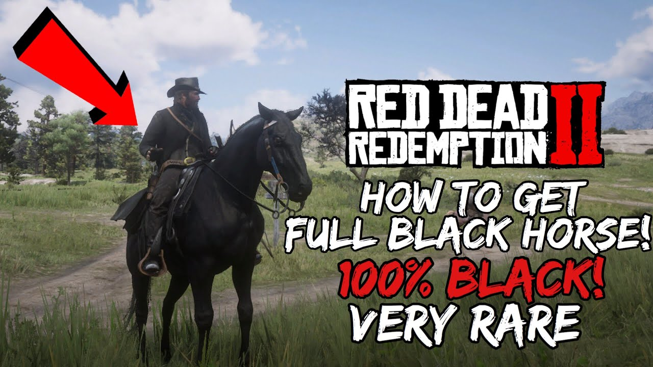 How To Get 100 Black Horse Extremely Rare Rdr2 Youtube