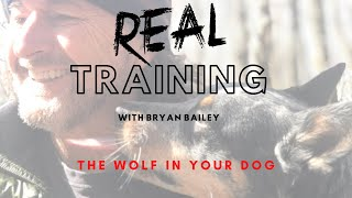 The Wolf In Your Dog