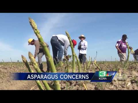 Asparagus farmer: It's hard to compete with foreign growers