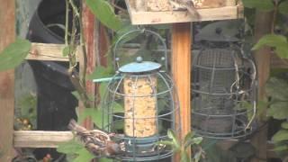 Nikon D3200 - Filming the Bird