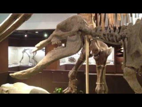 Paleozoological Museum of China Beijing China (5 last)