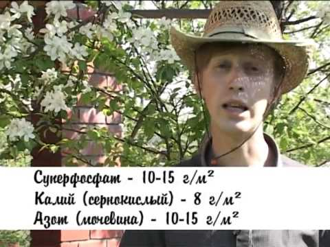 Дачники Подкормка плодовых деревьев Выпуск 22 Тагил ТВ