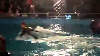 дельфины умные