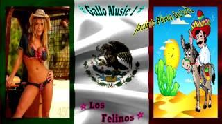 JACINTO PEREZ DE LA O ~ en vivo ~ ★ Los Felinos ★