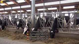 JOURDAIN leader 3 bâtiments d'élevage bovin avec cornadis, logettes