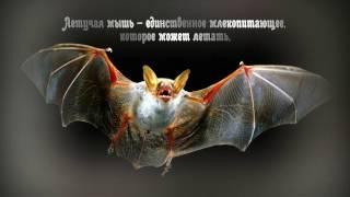 Интересные факты о животных. А вы это знали?..