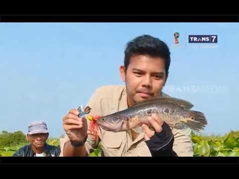 Dahsyatnya Tarikan Ikan di Sungai Hitam Riau - Jejak Petualang Wild Fishing