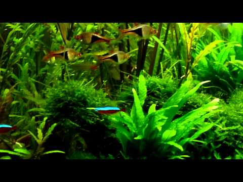 Planted Fluval Studio 900 Aquarium
