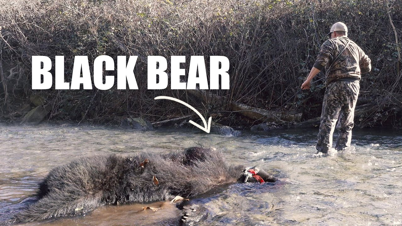WINCHING A BEAR ACROSS A RIVER - Bear Hunting