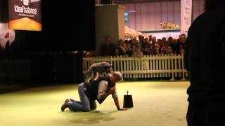 Dima Yeremenko Superdogs Live Nec 2014 Talented Dog.