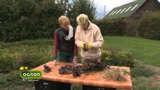 Jak sadzić i dzielić piwonie? Wszystko o ich pielęgnacji - Ogród Bez Tajemnic