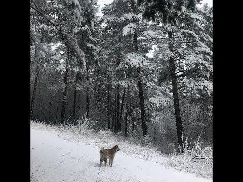 Майский снегопад в Тынде