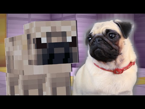 Thumbnail: PUGS PLAY MINECRAFT