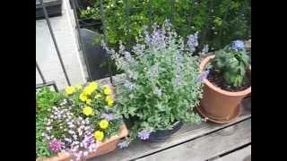 containter garden 11201