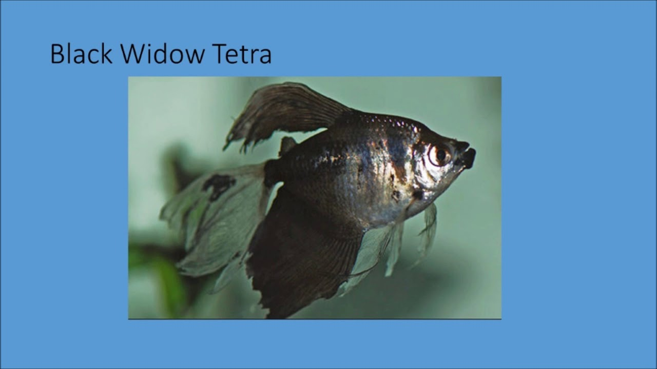 Types of Fishes Top, Middle & Bottom Dweller