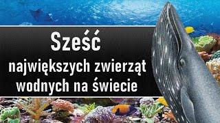 PRZYRODA: Sześć największych żyjących zwierząt wodnych