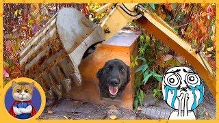 Что стало с собакой Ночкой и нашим садом? Три раза спасли Ночку
