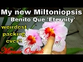 My new Miltoniopsis Benito Que ''Eternity'' - wierdest and yet, the best packing ever!!
