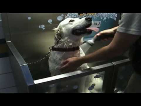 K9000 coin operated self serve dog wash youtube k9000 coin operated self serve dog wash solutioingenieria Choice Image