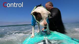How To Teach Your Dog to Surf  Dog Surfing Lesson