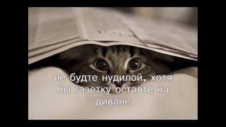 Как сделать кошку счастливой. happy cat(забавное видео про кошек, коты и кошки и все о них funny video about cats., 2016-03-14T08:06:00.000Z)