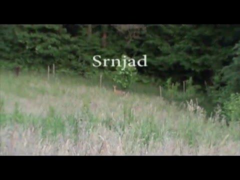 Srnjad-poletje-2015