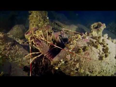 Lost Ships of Rome | Secrets of The Dead