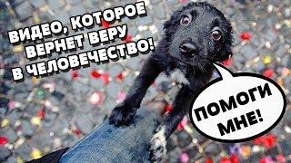 Видео, которое вернет веру в человечество / добрые поступки / спасение животных
