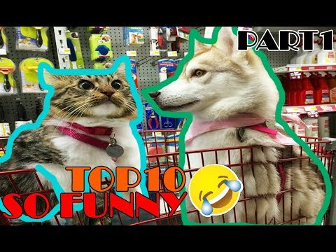 Best Funny Husky Puppies Video Compilation 2017 (Part 1)