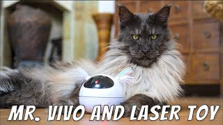 Mr.ViVo and laser toy   Is the king of all Maine Coon cats impressed?