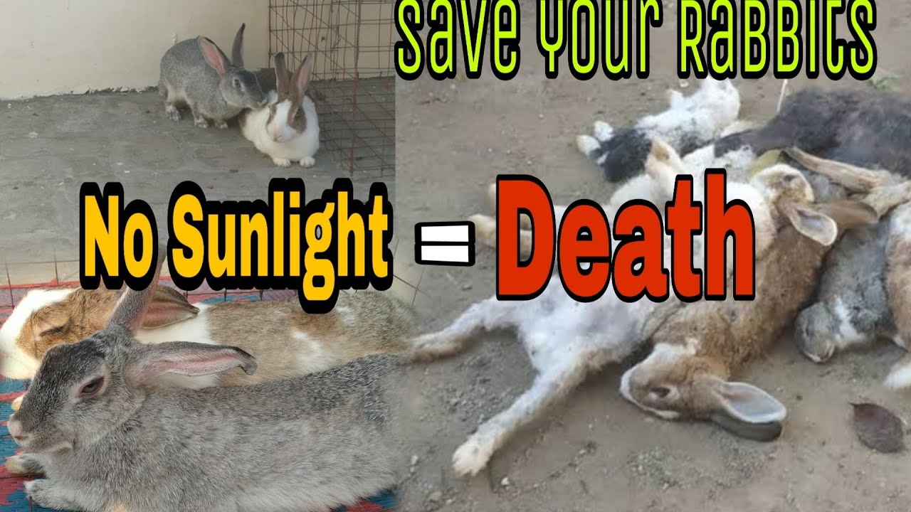 Importance of Sunlight for Rabbits || Rabbit's Life Expectancy || All About Pets