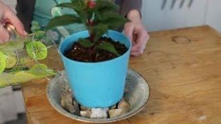 How to Raise the Humidity of an Indoor Garden : Indoor Planting(, 2013-04-06T02:10:10.000Z)