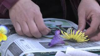 Gardening Tips : Tips for Scrapbooking Flowers