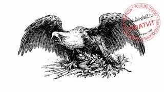 Как нарисовать орла поэтапно простым карандашом(83 486 рублей за 22 дня! НОВАЯ УНИКАЛЬНАЯ СИСТЕМА ЗАРАБОТКА! http://glopages.ru/affiliate/1905293 НАЖИМАЙ прямо сейчас и УЗНАЕШЬ..., 2014-07-10T14:26:41.000Z)
