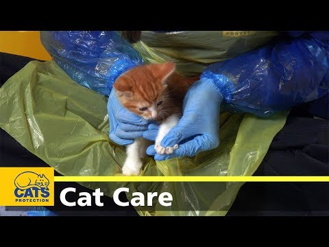 Should I Clip My Cat's Claws?