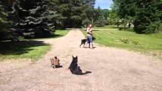 Smart Dog Equals Smart Training